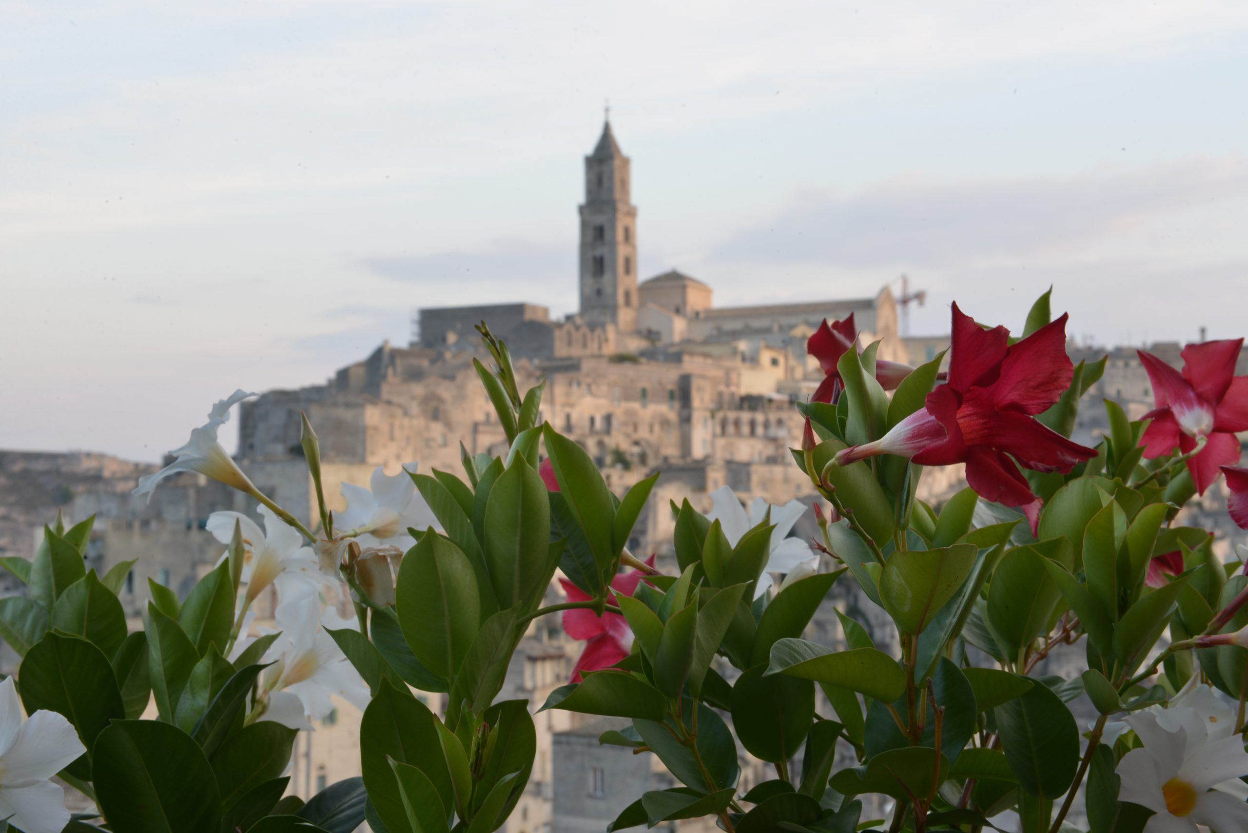 Sassi di Matera e fiori l'Affaccio dell'Abate